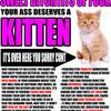 Kitten_copy